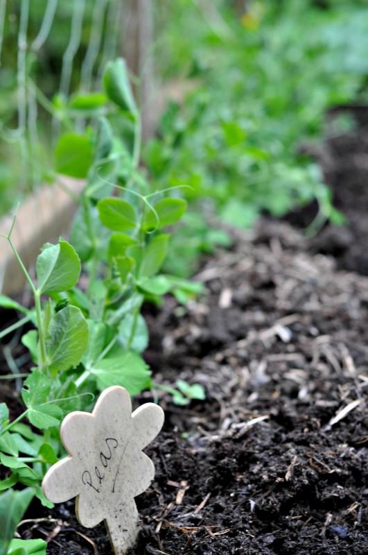 Gardening Update 7 - Suburble
