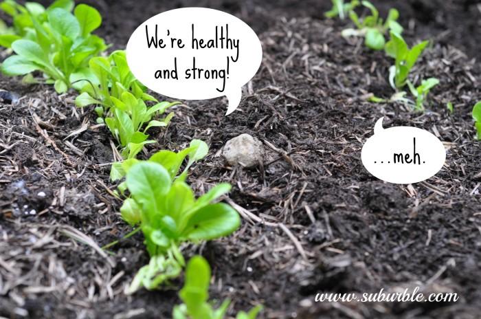 Gardening Update 9 - Suburble