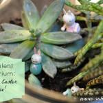 Make Your Own Succulent Terrarium (but don't drown it!)
