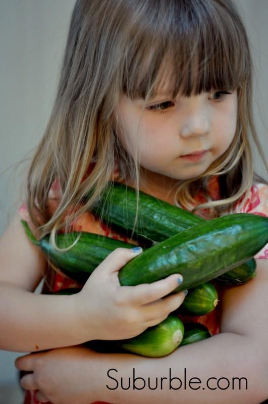 Cucumber Harvest 2 - Suburble