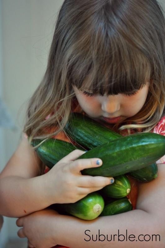 Cucumber Harvest - Suburble