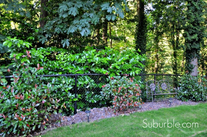 Evolution of a Backyard  4 - Suburble
