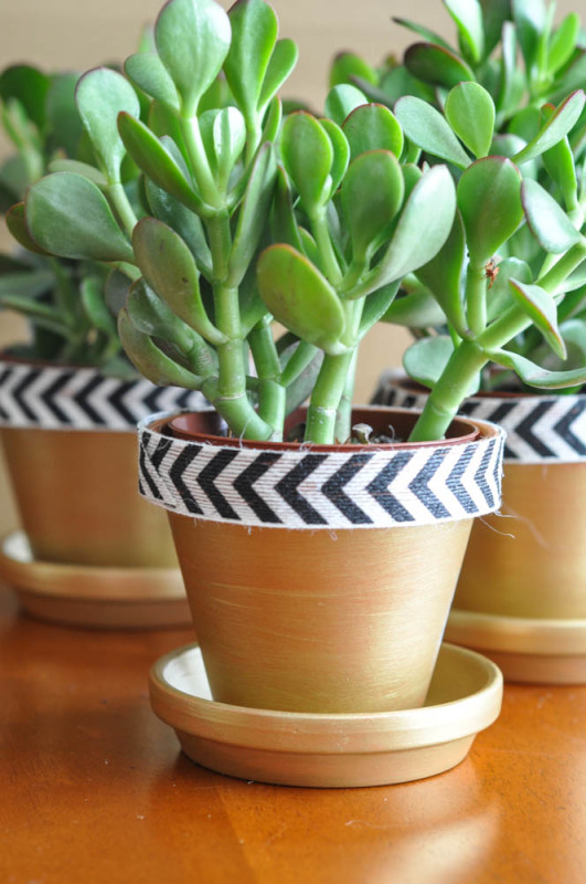 Gold and Chevron Terracotta pots  - Suburble.com (1 of 1)