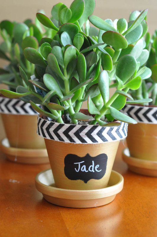 Jade Plant with Chalkboard Label - Suburble.com (1 of 1)
