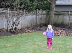 Putting the Backyard to Bed Part 2: Sad Grass and Planting Bulbs