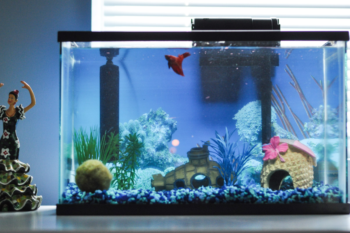 Setting up and taking care of your betta-7