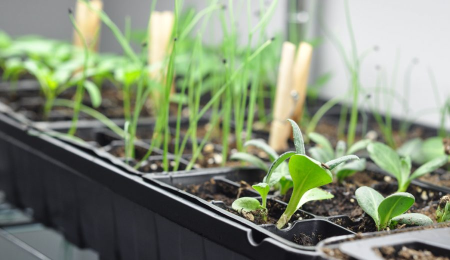 Starting Seeds Indoors: Don't Forget Your Fan!