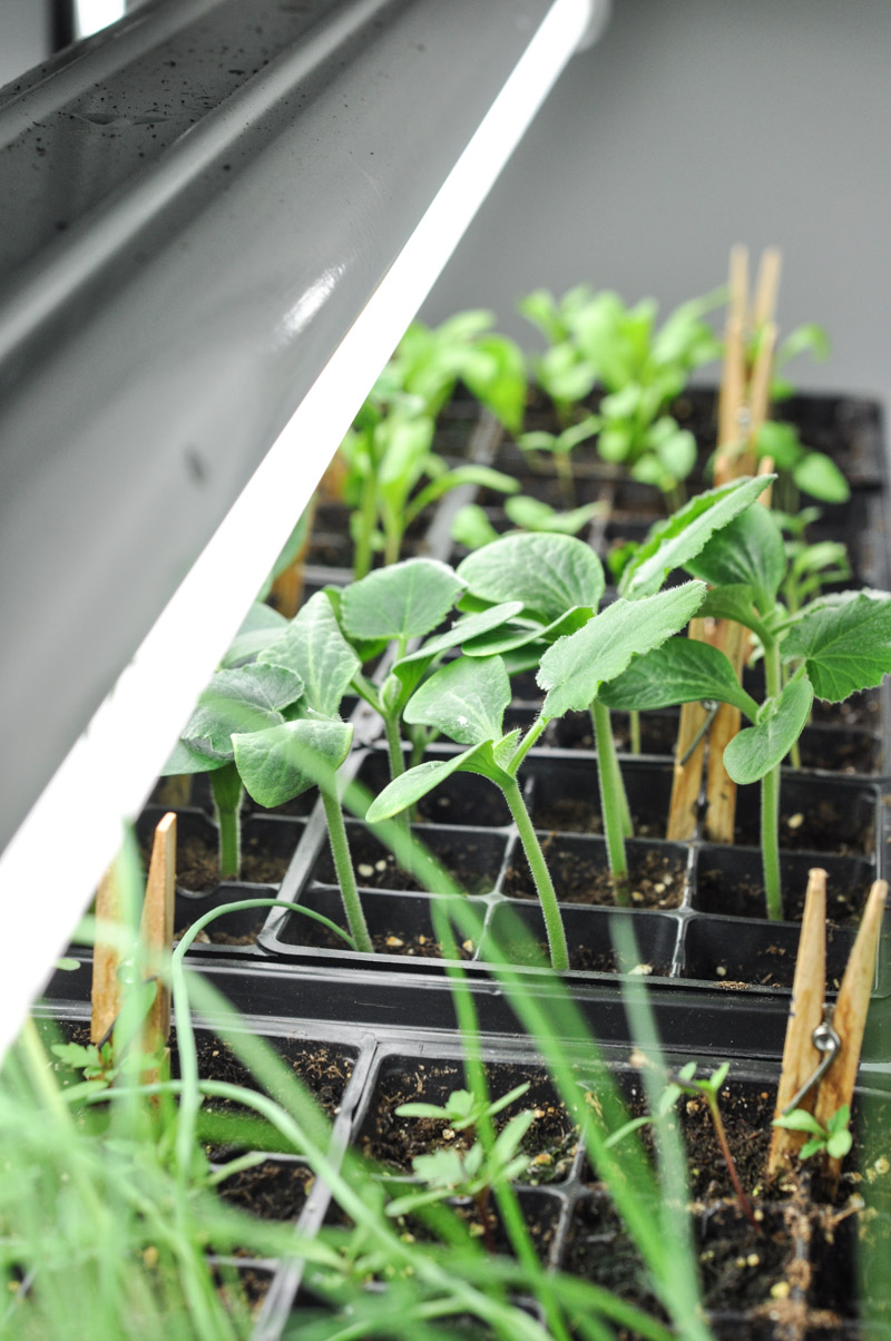 Seedlings 2017-2-2