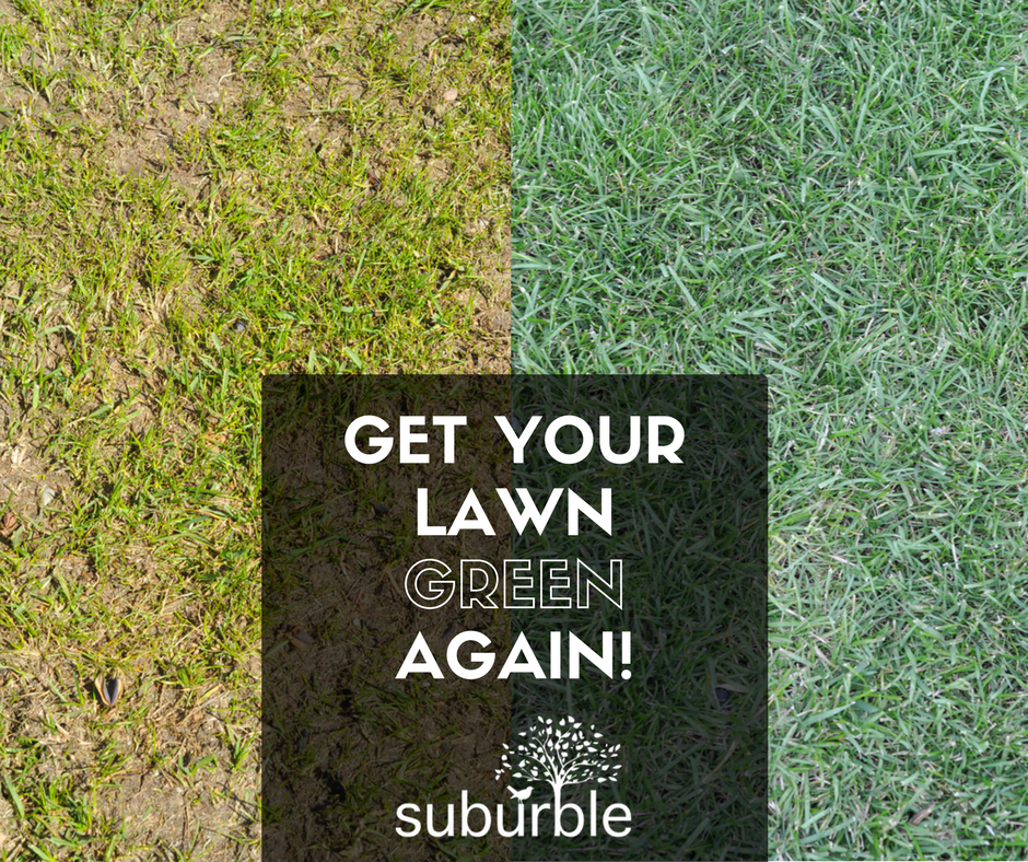 get your lawn green again!